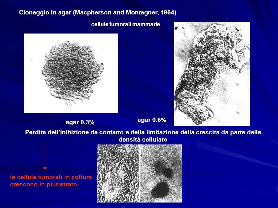 Clonaggio in agar (Macpherson and Montagner, 1964)