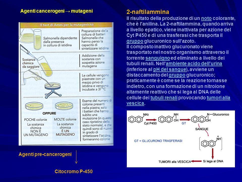 2-naftilammina Agenti cancerogeni → mutageni