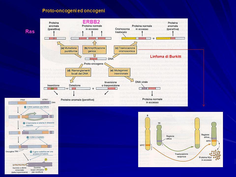 Proto-oncogeni ed oncogeni