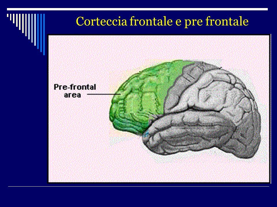 Corteccia frontale e pre frontale