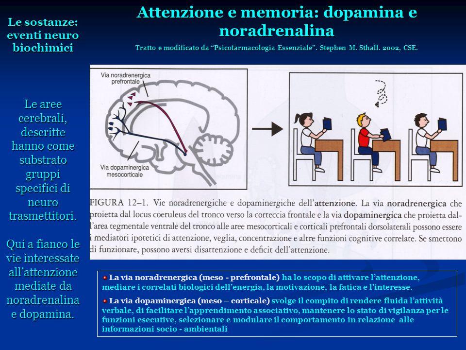 Attenzione e memoria: dopamina e noradrenalina