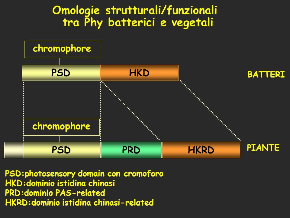 Omologie strutturali/funzionali tra Phy batterici e vegetali