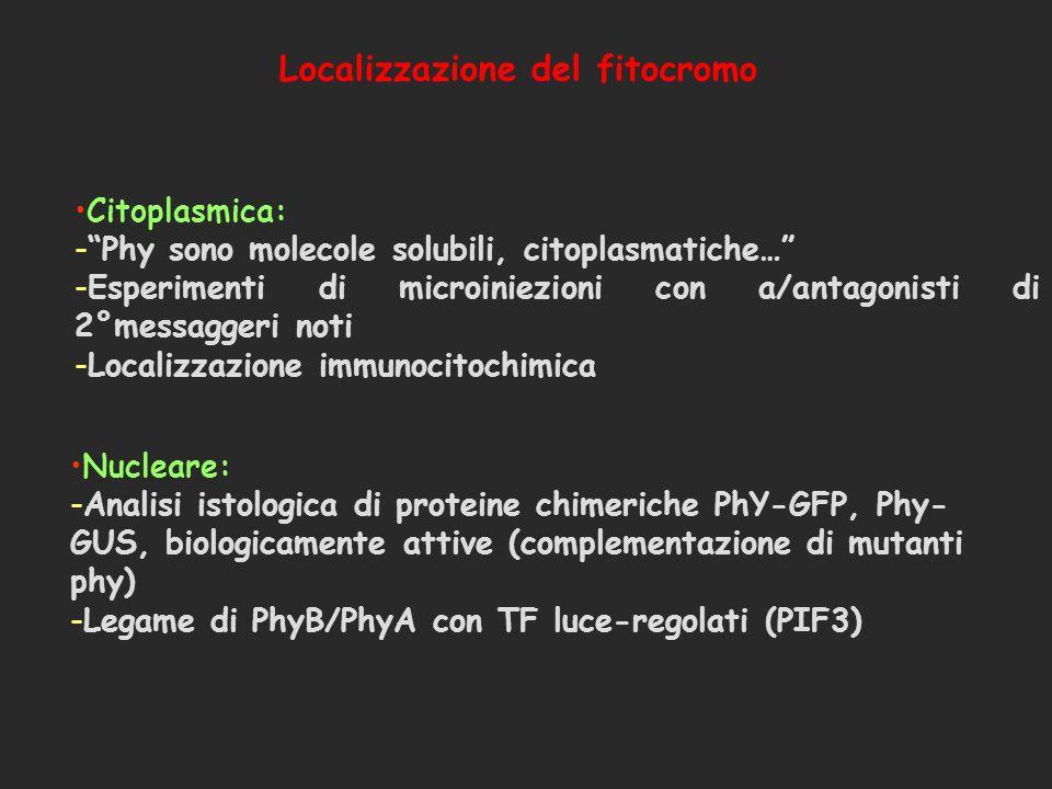 Localizzazione del fitocromo