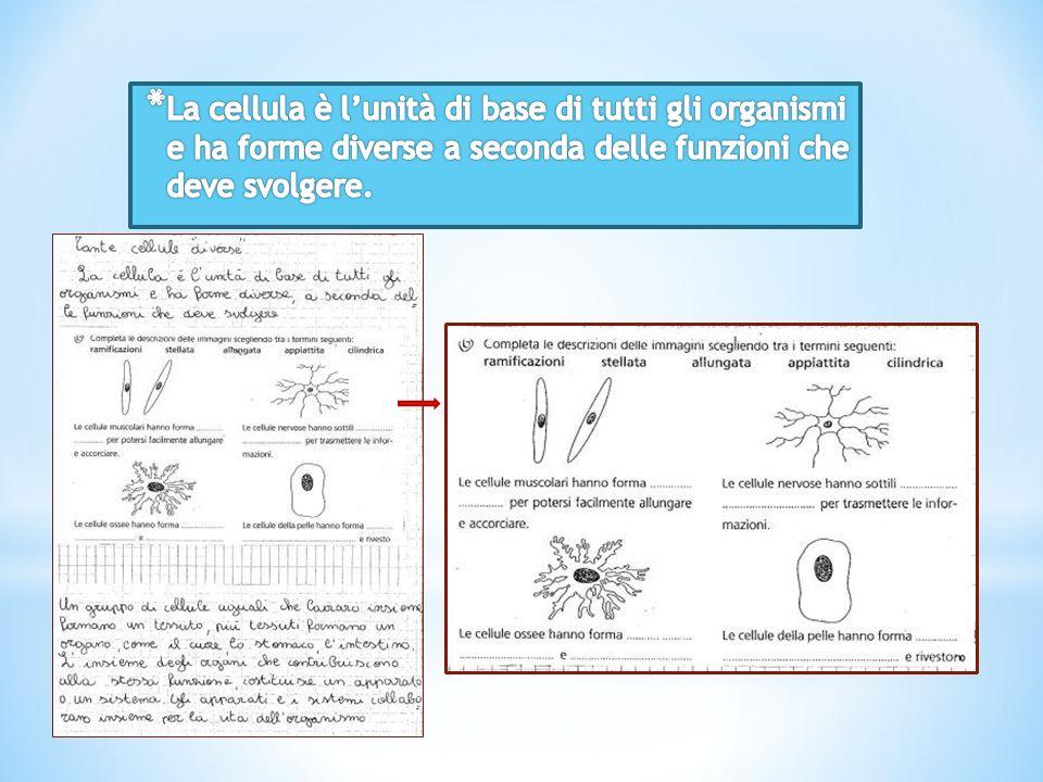 La cellula è l'unità di base di tutti gli organismi e ha forme diverse a seconda delle funzioni che deve svolgere.
