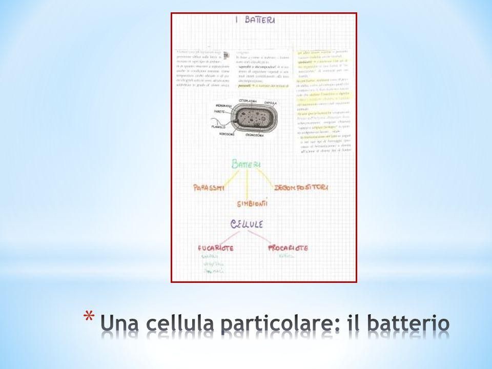 Una cellula particolare: il batterio