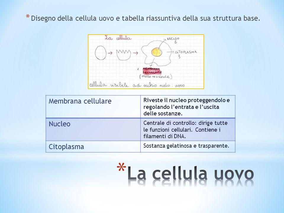 Disegno della cellula uovo e tabella riassuntiva della sua struttura base.