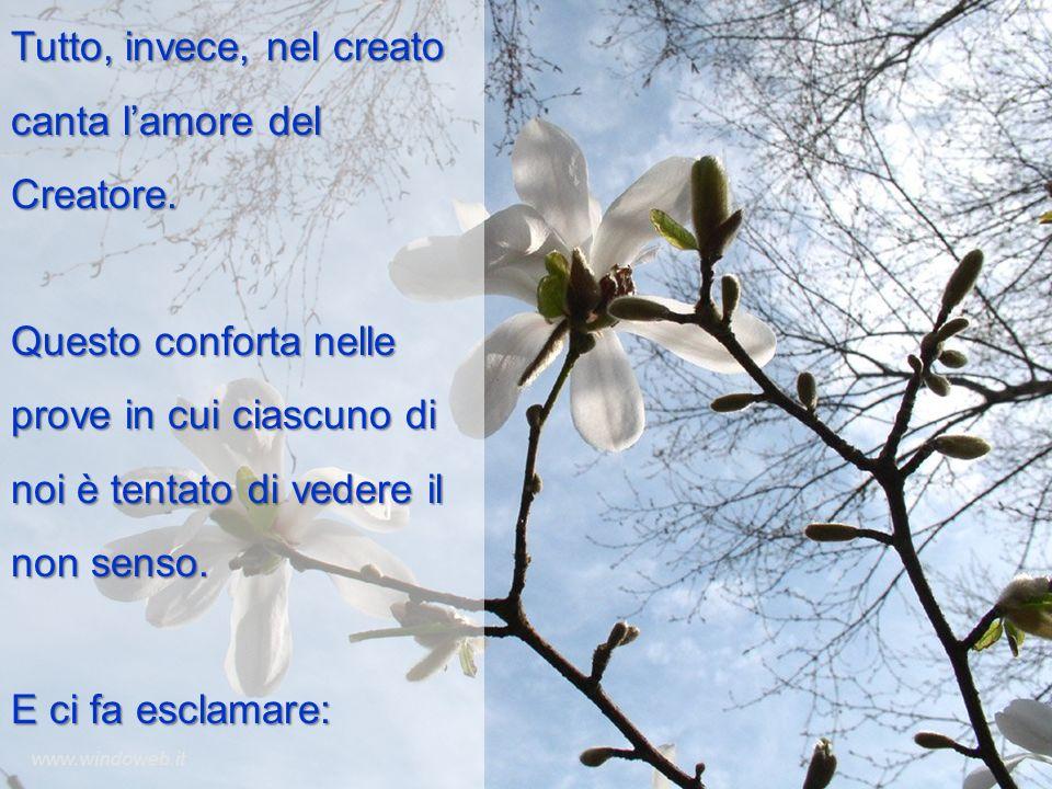 Tutto, invece, nel creato canta l'amore del Creatore.