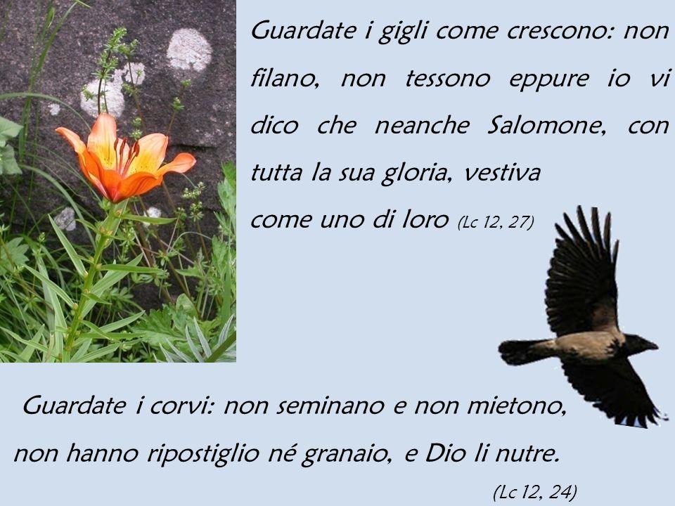 Guardate i corvi: non seminano e non mietono,