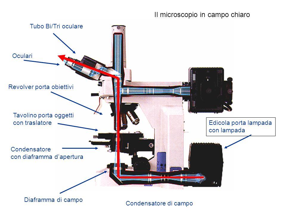 Il microscopio in campo chiaro
