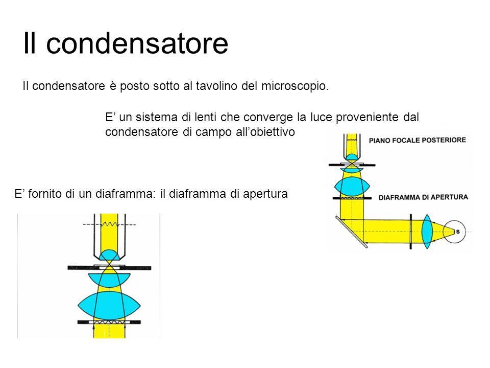 Il condensatore Il condensatore è posto sotto al tavolino del microscopio.