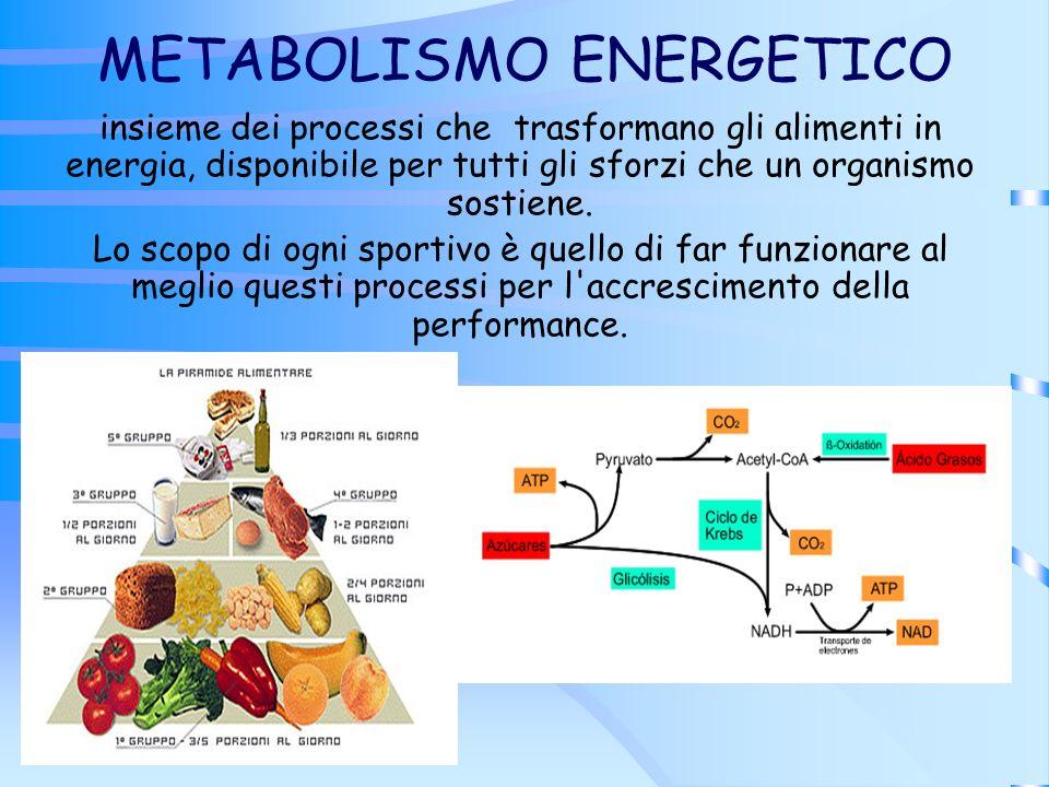 METABOLISMO ENERGETICO