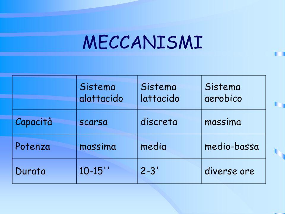 MECCANISMI Sistema alattacido Sistema lattacido Sistema aerobico