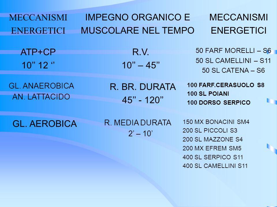 MECCANISMI ENERGETICI IMPEGNO ORGANICO E MUSCOLARE NEL TEMPO