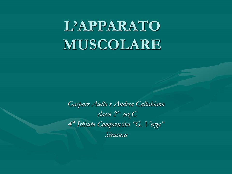 L'APPARATO MUSCOLARE Gaspare Aiello e Andrea Caltabiano