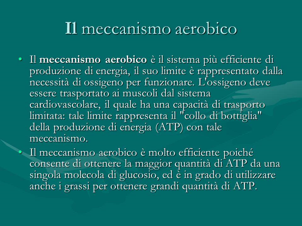 Il meccanismo aerobico