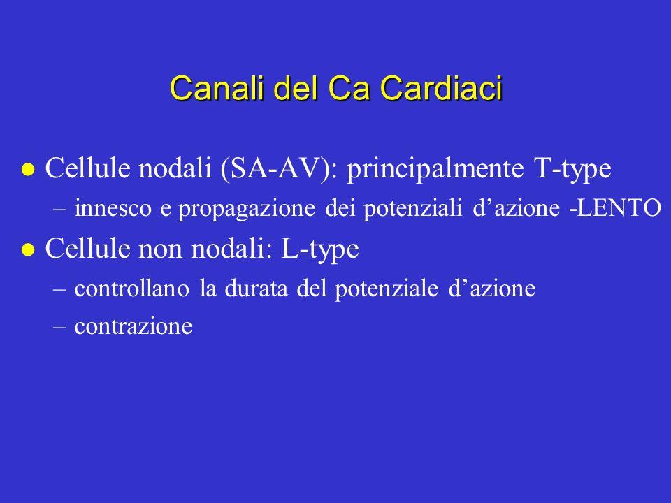 Canali del Ca Cardiaci Cellule nodali (SA-AV): principalmente T-type