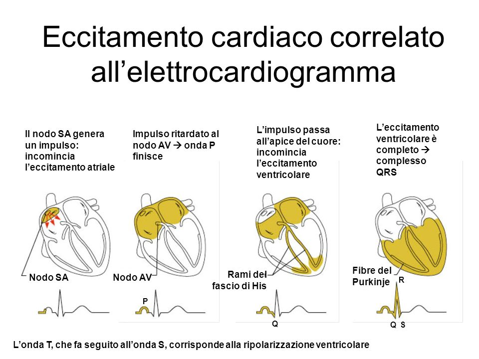 Eccitamento cardiaco correlato all'elettrocardiogramma