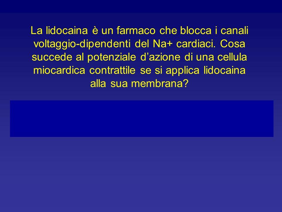 La lidocaina è un farmaco che blocca i canali voltaggio-dipendenti del Na+ cardiaci. Cosa succede al potenziale d'azione di una cellula miocardica contrattile se si applica lidocaina alla sua membrana