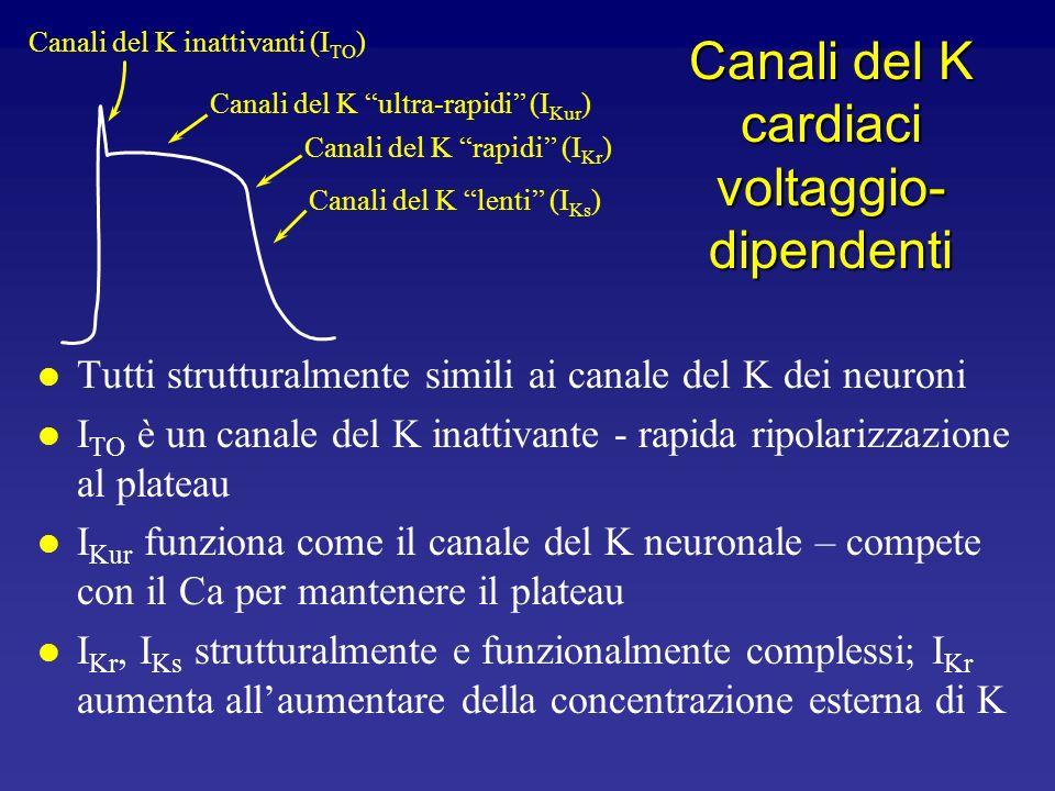 Canali del K cardiaci voltaggio-dipendenti