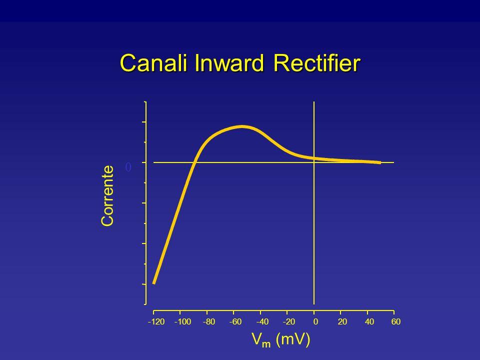 Canali Inward Rectifier