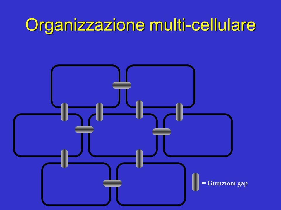 Organizzazione multi-cellulare