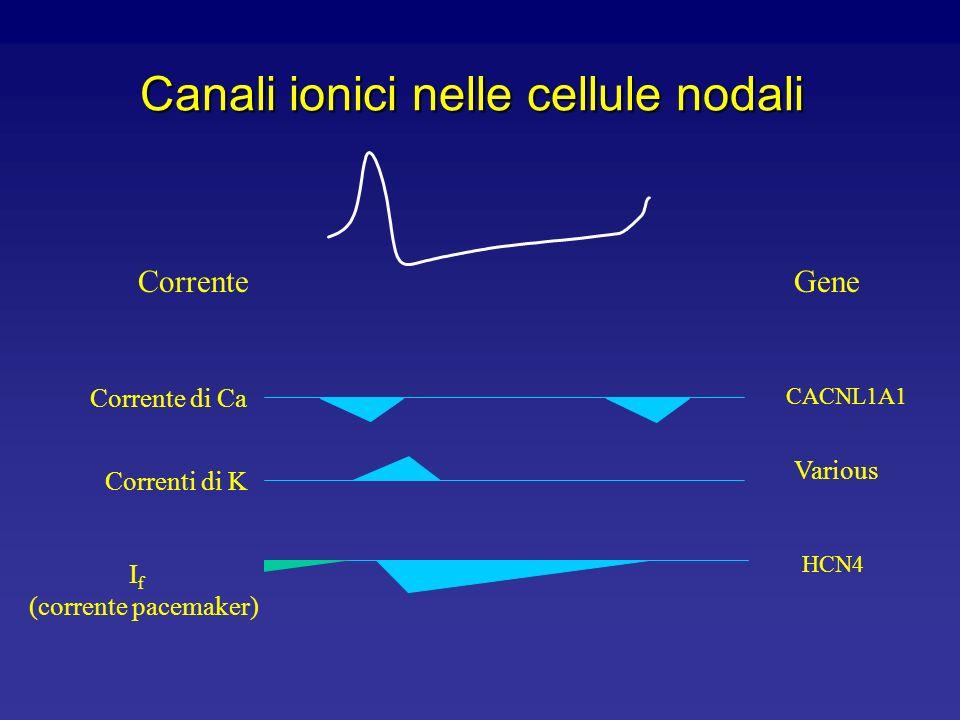 Canali ionici nelle cellule nodali