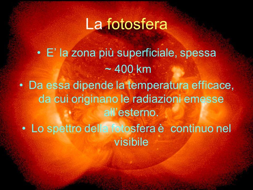 La fotosfera E' la zona più superficiale, spessa ~ 400 km