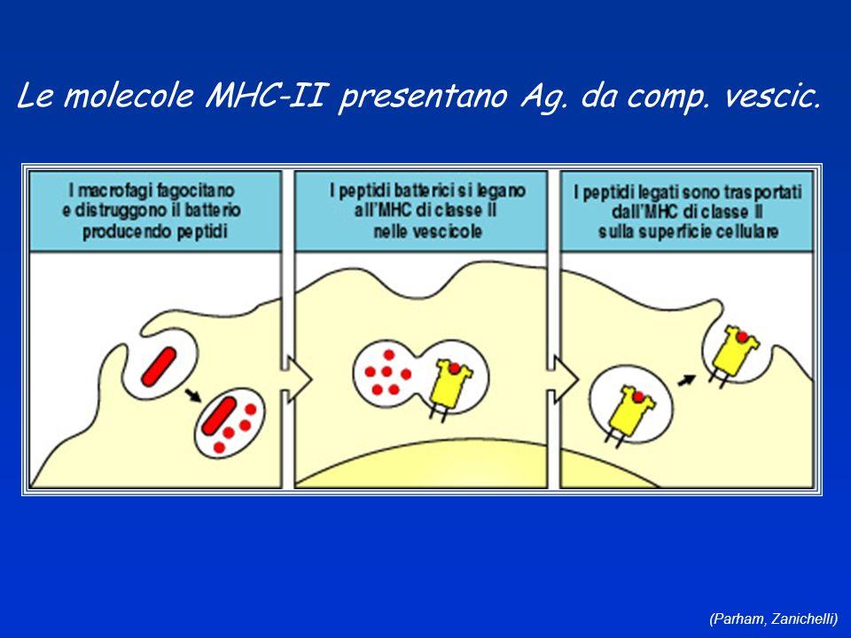 Le molecole MHC-II presentano Ag. da comp. vescic.