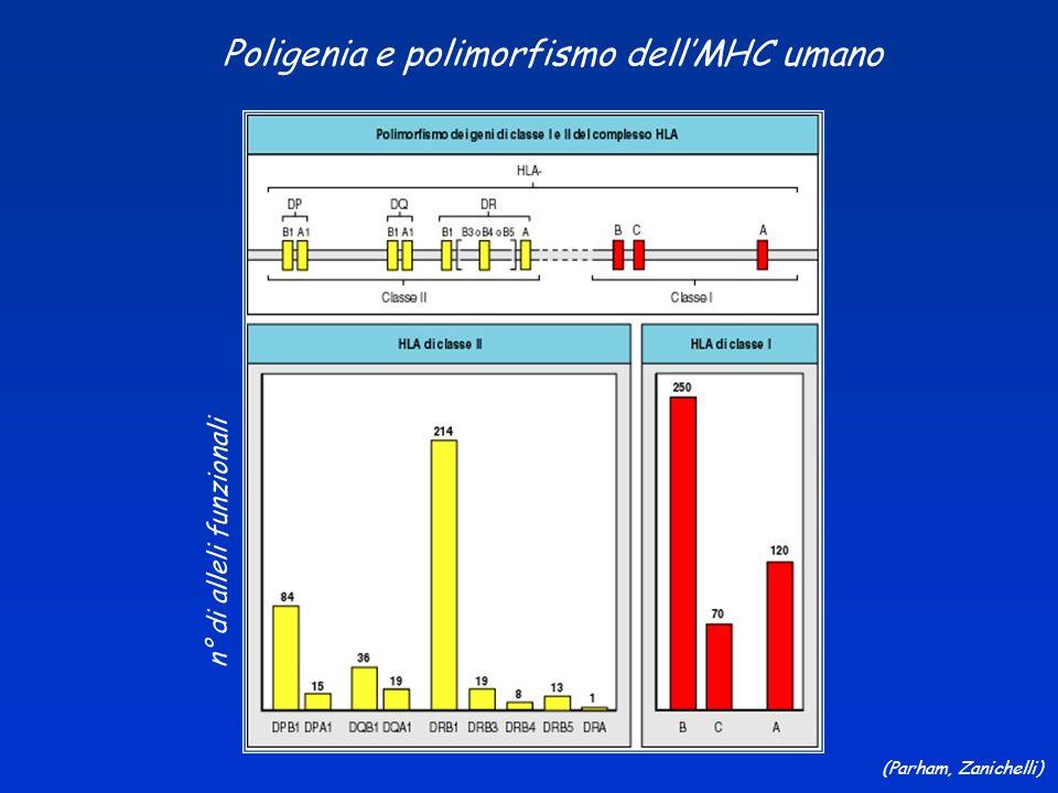 Poligenia e polimorfismo dell'MHC umano