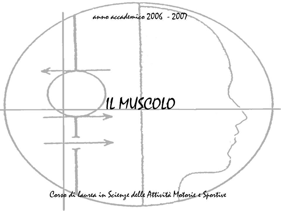 IL MUSCOLO anno accademico 2006 - 2007