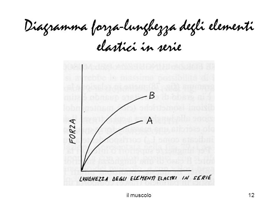 Diagramma forza-lunghezza degli elementi elastici in serie