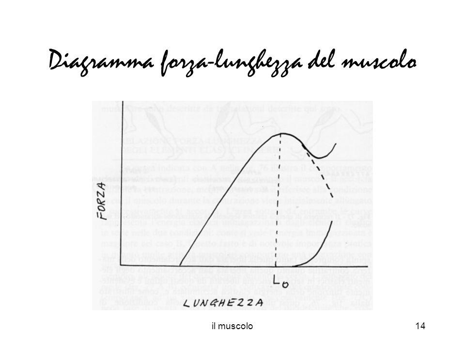 Diagramma forza-lunghezza del muscolo