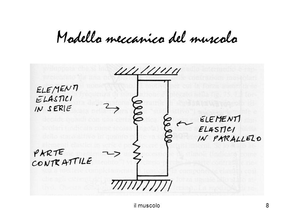 Modello meccanico del muscolo