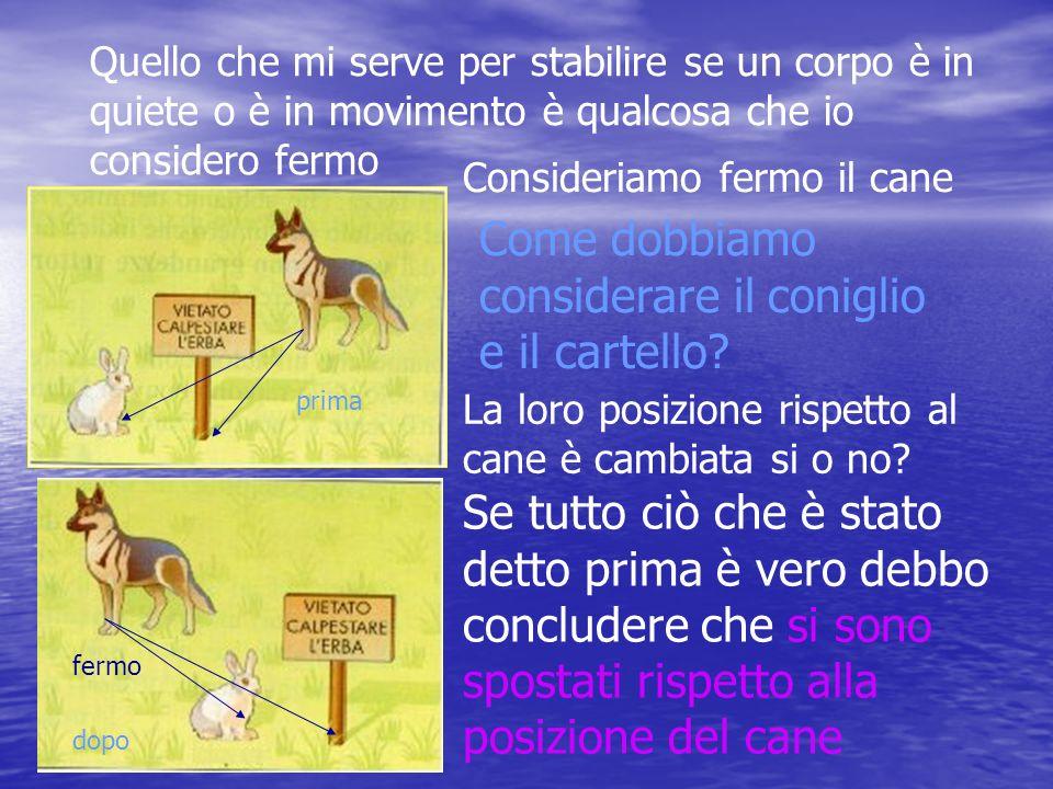 Come dobbiamo considerare il coniglio e il cartello
