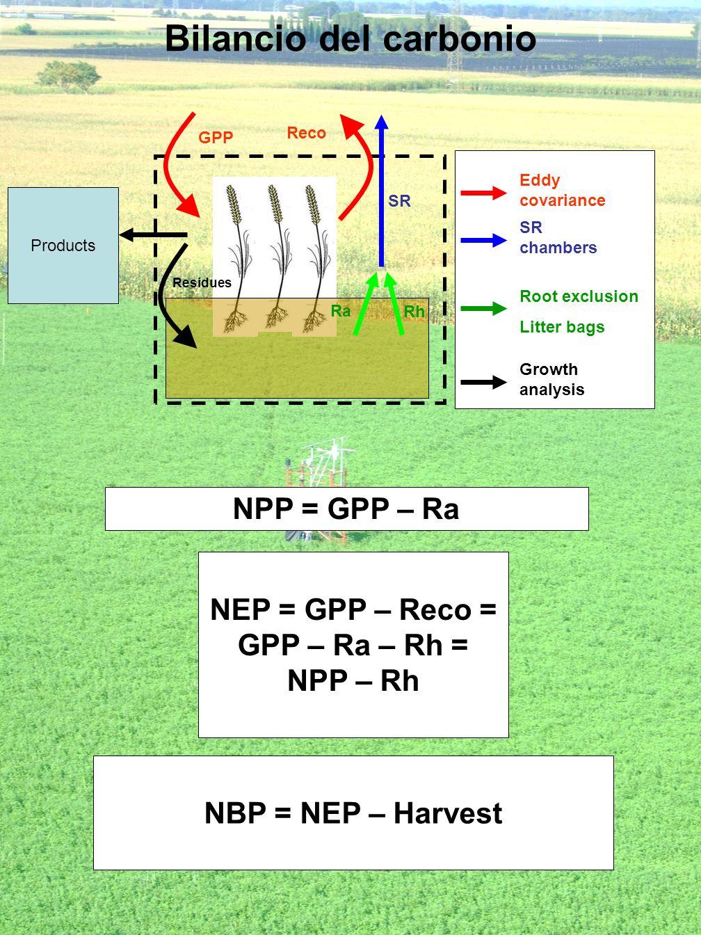 Bilancio del carbonio NPP = GPP – Ra NEP = GPP – Reco =