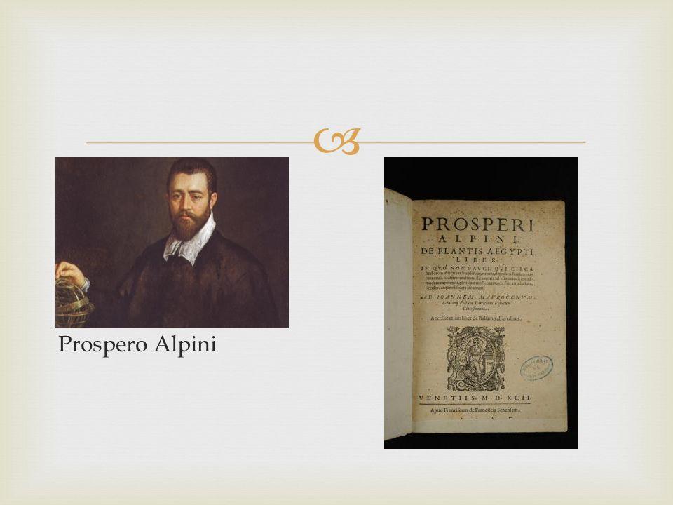 Prospero Alpini