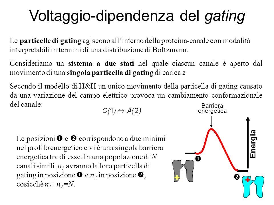 Voltaggio-dipendenza del gating