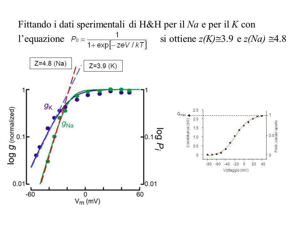 Fittando i dati sperimentali di H&H per il Na e per il K con l'equazione si ottiene z(K)3.9 e z(Na) 4.8