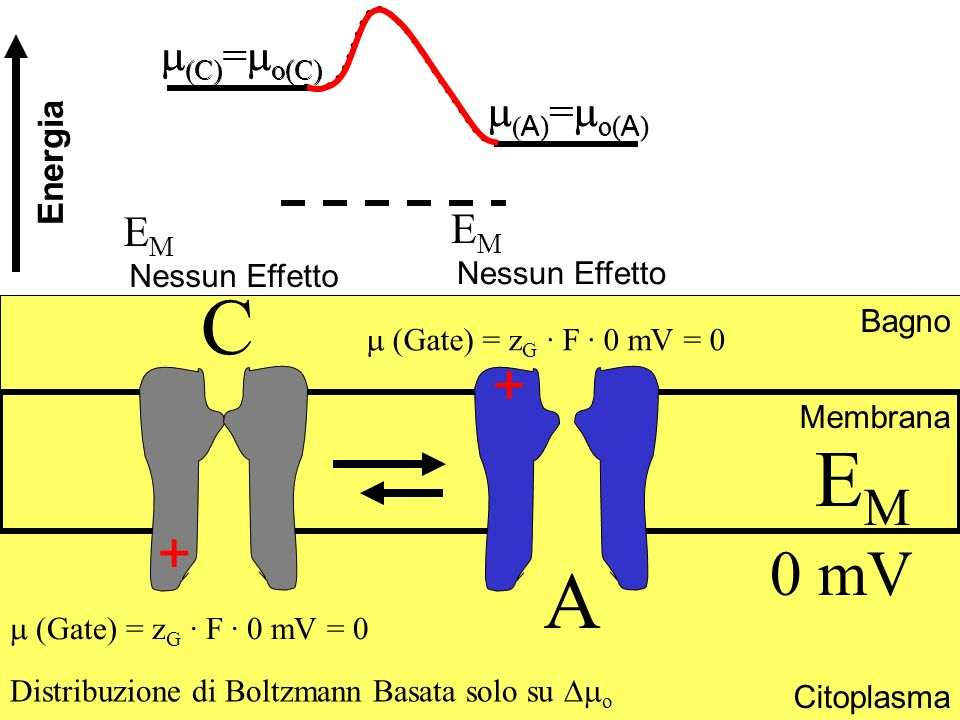 C EM A 0 mV + + m(C)=mo(C) m(C)=mo(C) m(A)=mo(A) m(A)=mo(A) EM EM