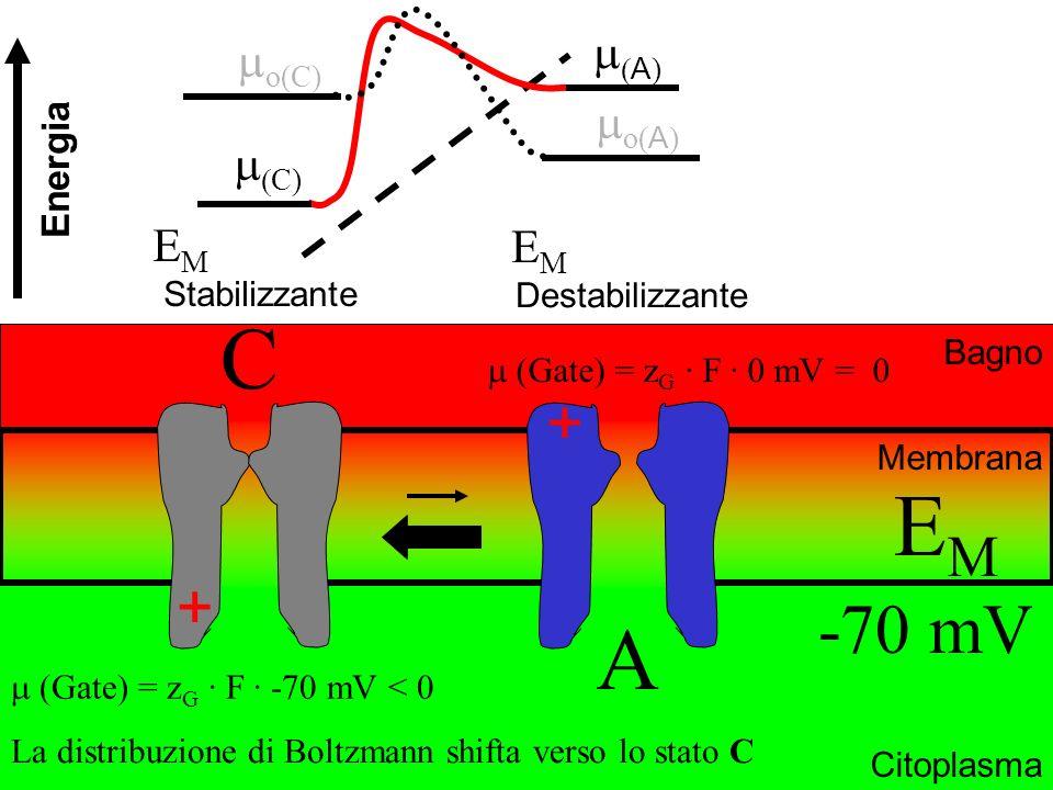 C EM A -70 mV + + m(A) mo(C) mo(A) m(C) EM EM Energia Stabilizzante