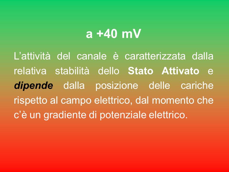 a +40 mV