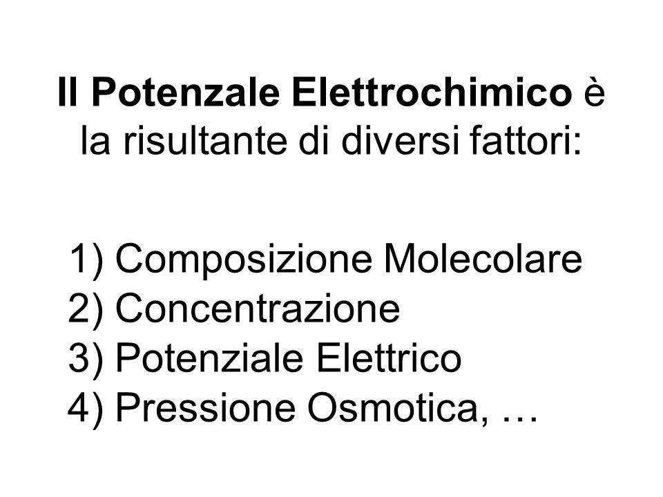 Il Potenzale Elettrochimico è la risultante di diversi fattori: