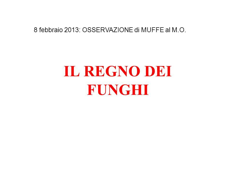8 febbraio 2013: OSSERVAZIONE di MUFFE al M.O.