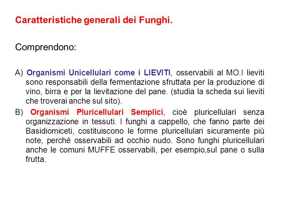Caratteristiche generali dei Funghi. Comprendono: