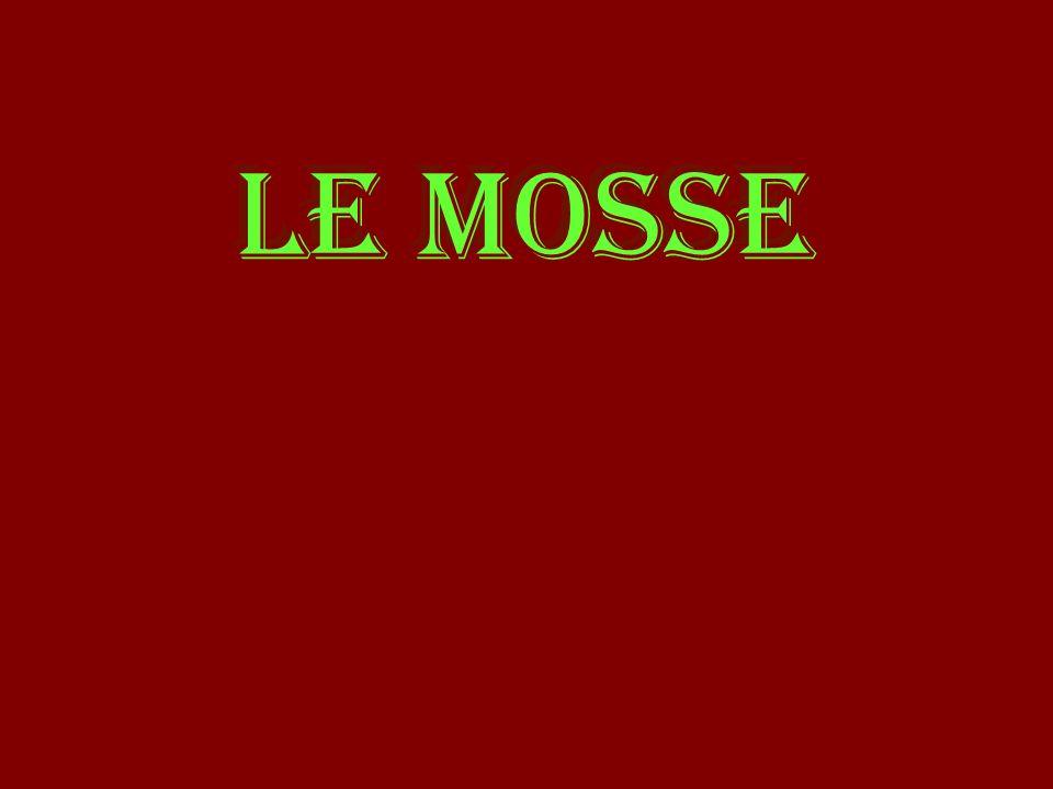 LE MOSSE