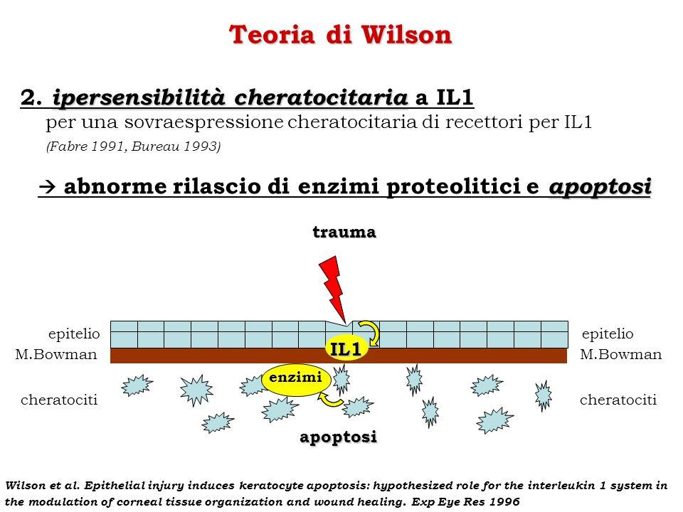Teoria di Wilson 2. ipersensibilità cheratocitaria a IL1
