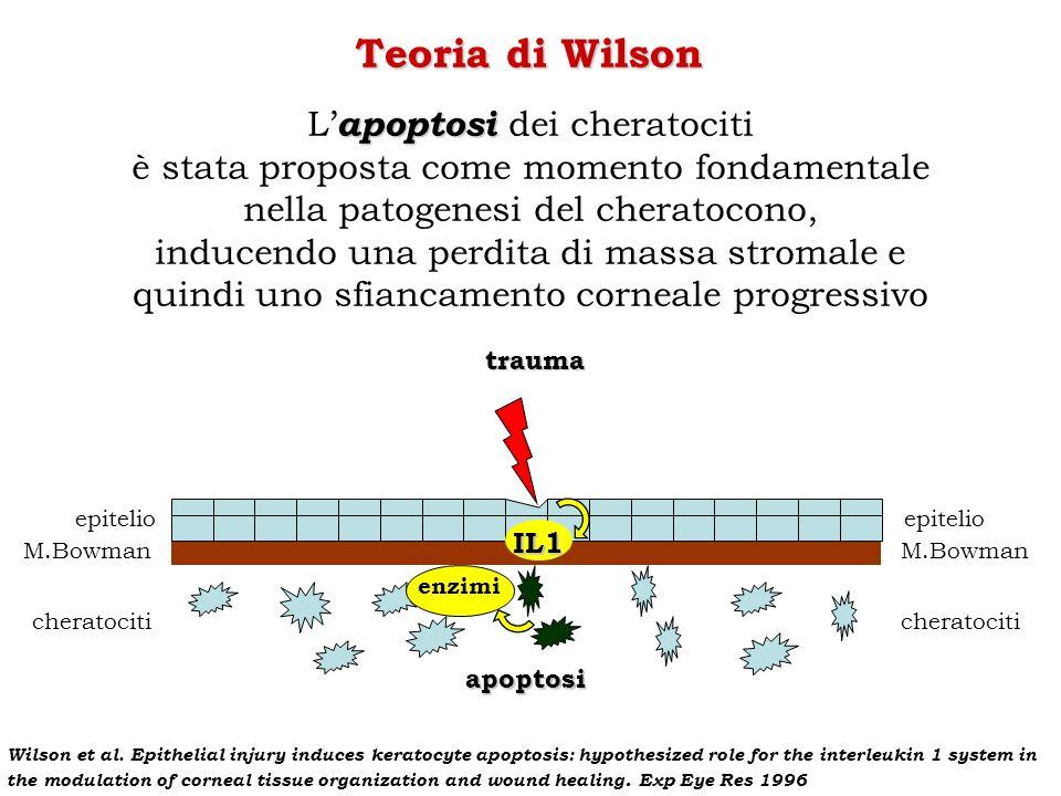 Teoria di Wilson L'apoptosi dei cheratociti