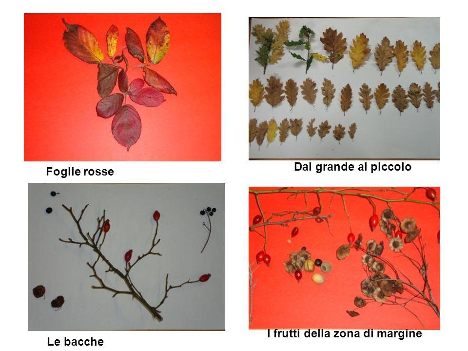 Dal grande al piccolo Foglie rosse I frutti della zona di margine Le bacche