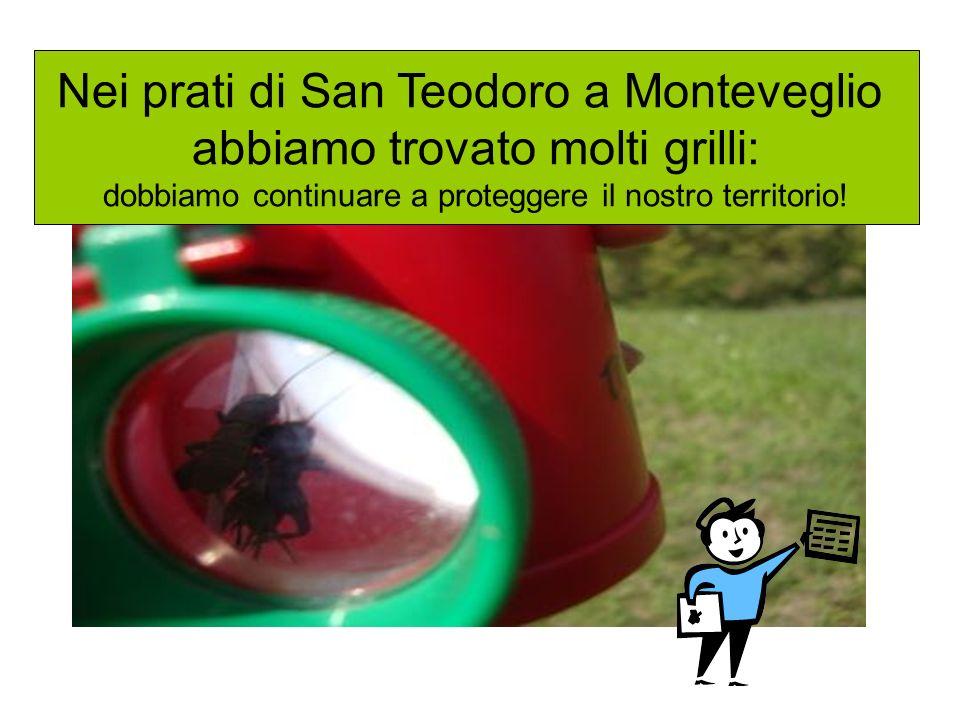 Nei prati di San Teodoro a Monteveglio abbiamo trovato molti grilli: