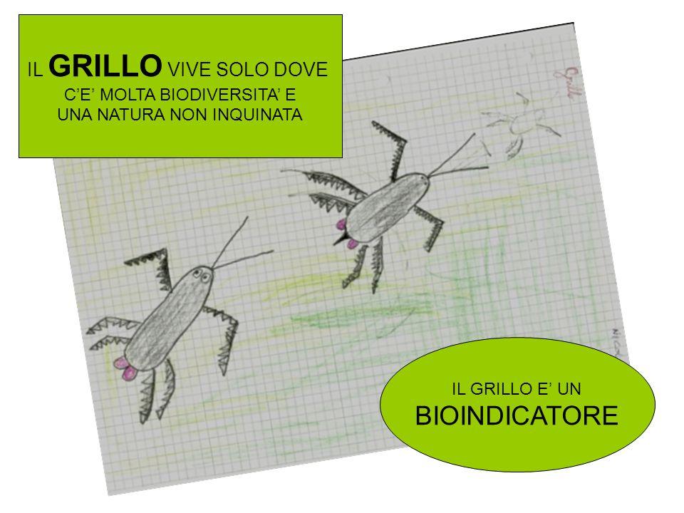 BIOINDICATORE IL GRILLO VIVE SOLO DOVE C'E' MOLTA BIODIVERSITA' E